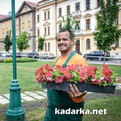 Több mint 23 ezer virágpalántát ültetnek el Szekszárd közterületein