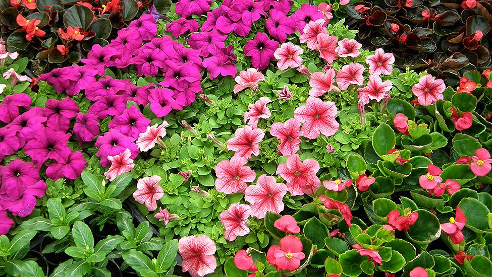 Kedvezményes virágvásár